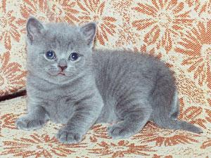 КОШКИН ДОМ. Мальтийская кошка