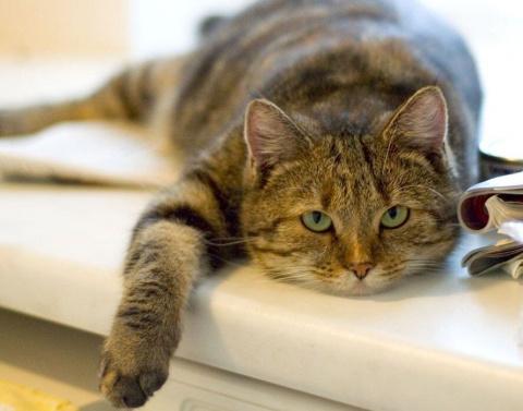 В каком возрасте котики стареют? (как подсчитать). У крысы из глаз и носа идет «кровь». Что делать?