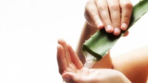 Алоэ вера (полезные свойства, применение, лечение, рецепты сока)