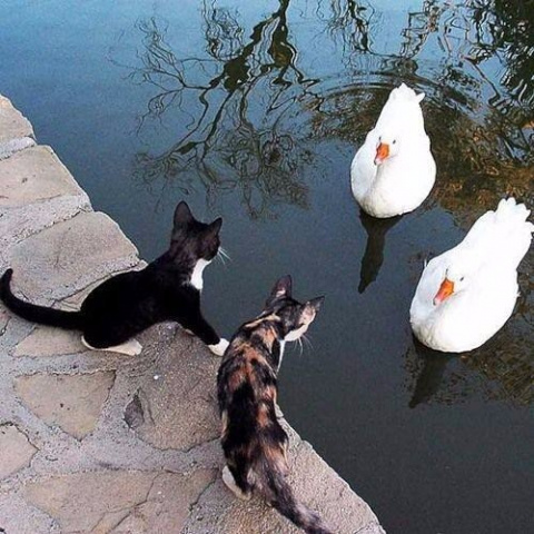 Когда осознал, что ты кот, и…