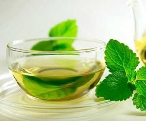 Отвар мяты и цикорий расслабляют лучше алкоголя