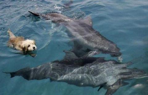 Песик, решивший стать дельфином