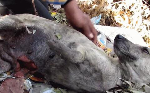 Этого пса нашли на грани жиз…