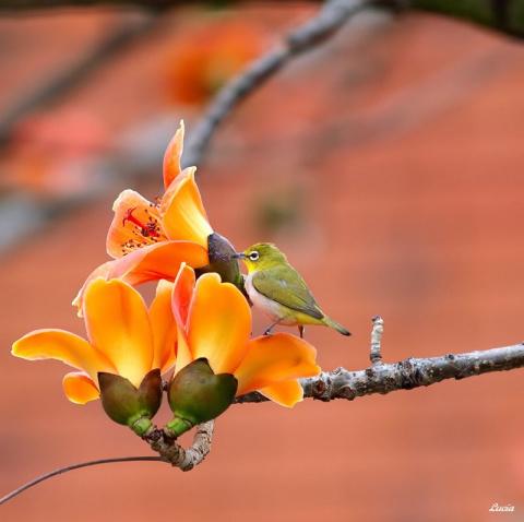 Красивые фотографии птиц и весенних цветов