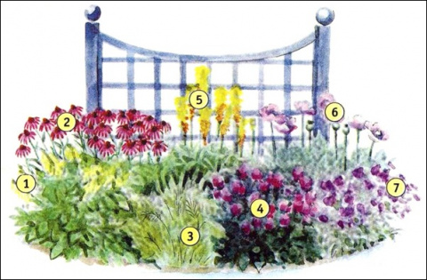 Цветы для сада+схемы красивых цветников