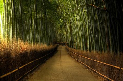 Бамбуковая роща Сагано - природное сокровище Японии