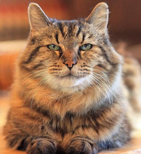 Самому старому коту в мире и…