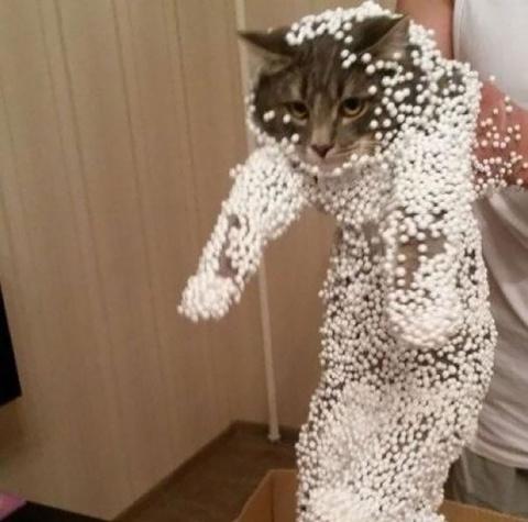 20 кошек, которые  пожалели …