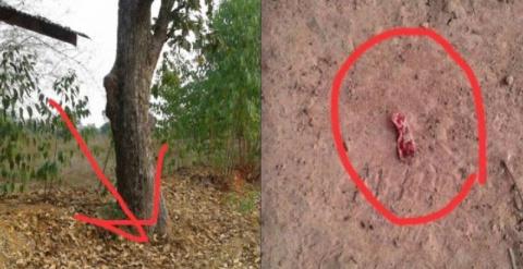 Женщина услышала странные звуки, доносящиеся от дерева. То, что она там увидела, повергло ее в шок!
