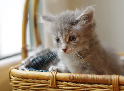 Восемь маленьких  кошачьих душ ждут своих мамупапу