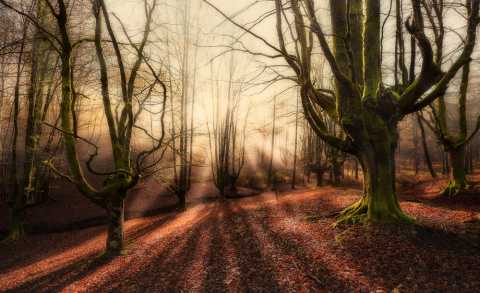 Самые магические леса нашей планеты