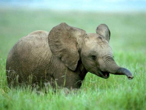 Китайская полиция спасла слоненка
