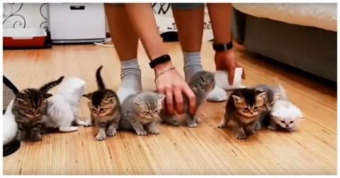 Котомиссия невыполнима: попытка усадить перед камерой 10 котят