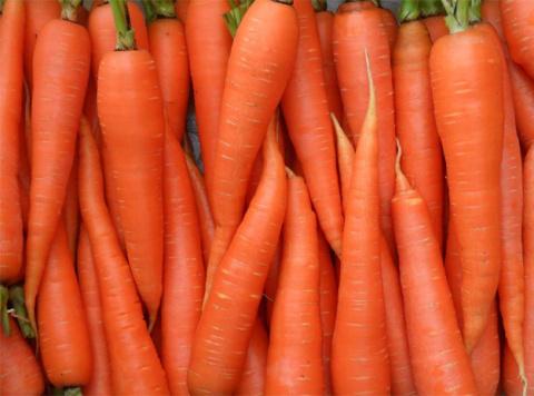 От чего зависит сладость моркови