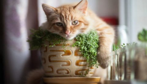 Котонепроницаемые растения: защищаем зелень от любимых вредителей