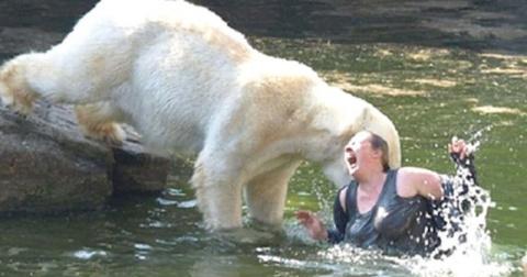 12 нападений медведя на человека, которые попали на пленку