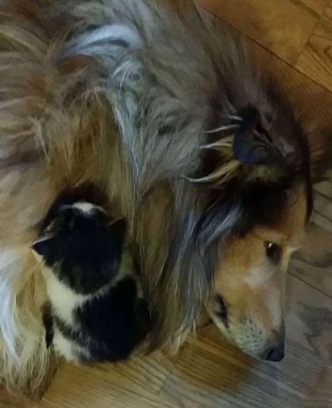 Кошка с собакой спят вместе …