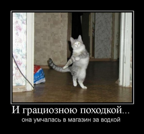 Всяка КотоПсяка :)