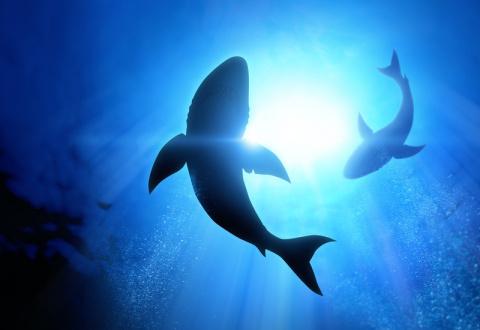 9 ситуаций, когда от акул то…