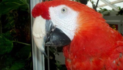 В Швеции не дали усыпить 50-летнего попугая-кинозвезду