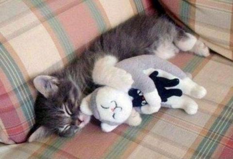 Кошки — удивительные существа...