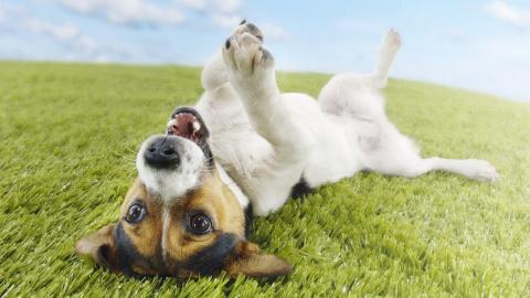 Почему собака валяется в падали???