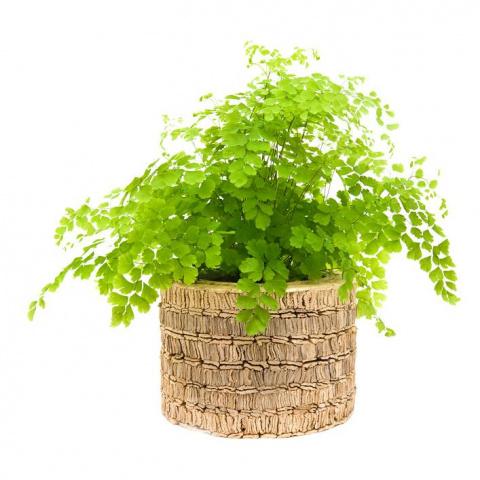 7 лучших комнатных растений, которым не надо много света
