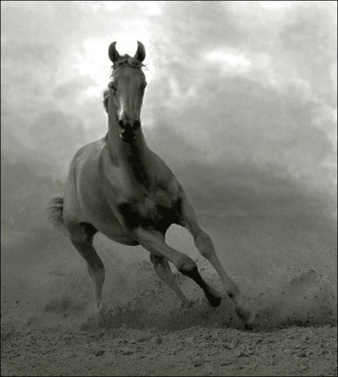 бегущая лошадь | самое