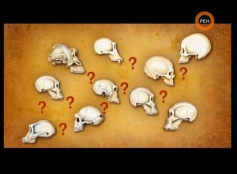 ДНК Показало что мы с неандертальцами никак не связаны. Предков наших учёные не нашли. Может мы действительно произошли от Богов?