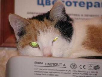 Кошкоцветотерапия