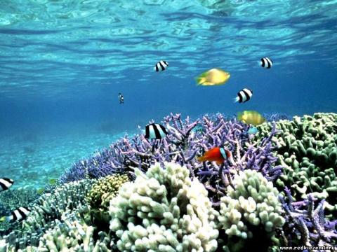 Визуализация 6: Изучаю подводный мир