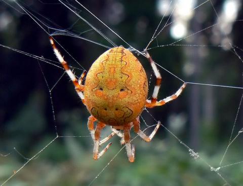 вот такой паук!!!