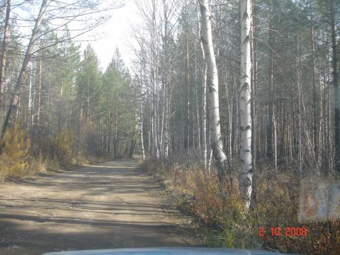 Лес Забайкальского края