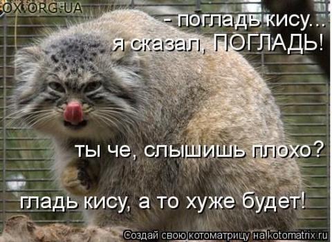 Ну погладь!:)
