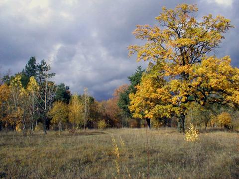 Румлево осенью