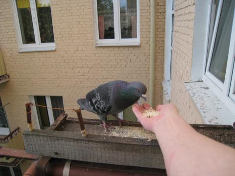Мой птиц!