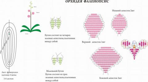как правильно плести орхидеи из бисера