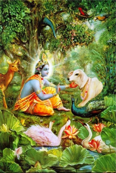 Кришна - это центр всего сущего, во Вриндаване он явил все Свои совершенства
