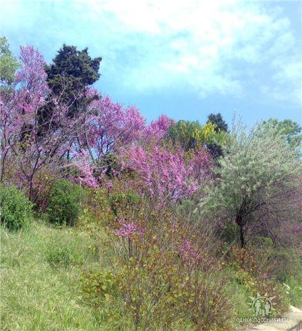 Весна в Бургасе