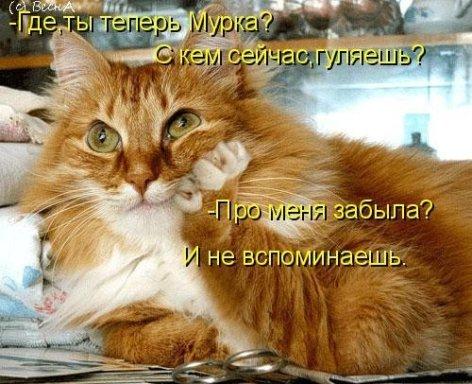 кот кот