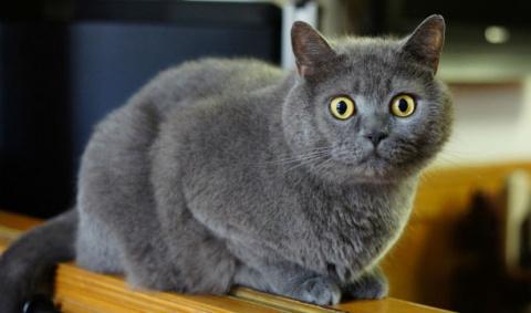 В Рязани собака спасла закопанную заживо кошку