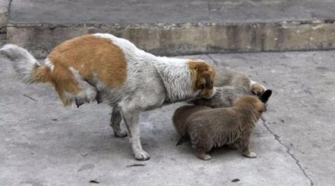 Двуногая собака стала замеча…