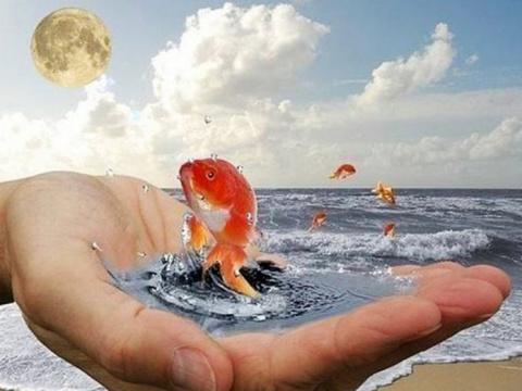 Матрос поймал золотую рыбку …