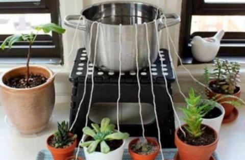 Научитесь поливать растения,…