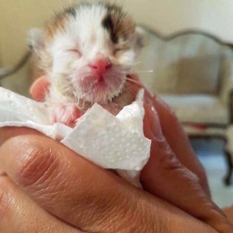 Спасая котёнка из мусорного …