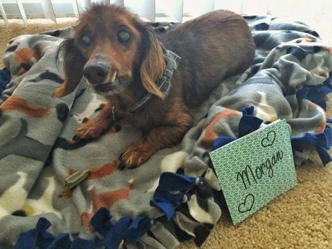 18-летний пес катается на мотоцикле и ждет открыток ко дню рождения