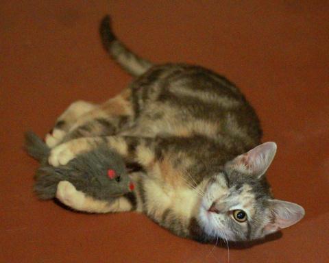 Нужен особенно-любимый дом для особенных кото-ребят!!!