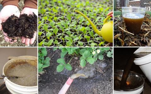 Что такое компостный чай, как его правильно сделать и применять на даче