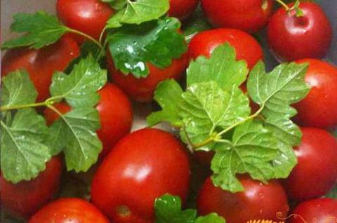 Как сохранить свежие помидоры на зиму. Хачапури по имеретински