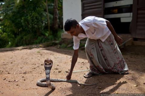 Укротитель змей, Шри-Ланка